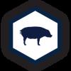 Porcine icon
